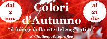 Colori d'autunno, il Foliage della Vite del Sagrantino