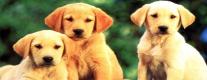 Esposizione Canina Amatoriale Tuder Dog 2014