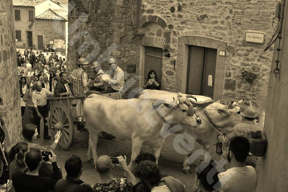 Festa di S. Isidoro Agricoltore - I Pugnaloni di Allerona