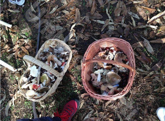Giornata delle Castagne e dei Funghi
