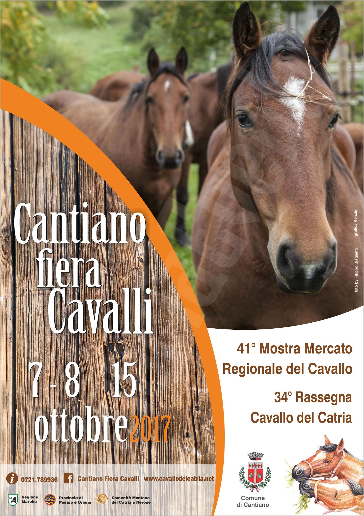 Cantiano fiera cavalli 2017 mostra mercato catria eventi for Eventi marche 2017