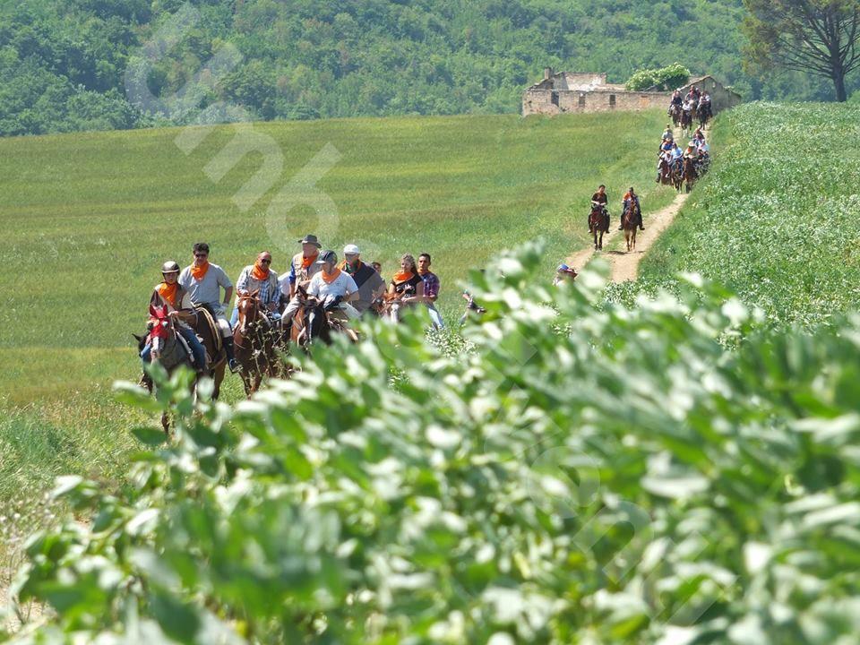 Passeggiata a Cavallo fra Colline e Antiche Mura