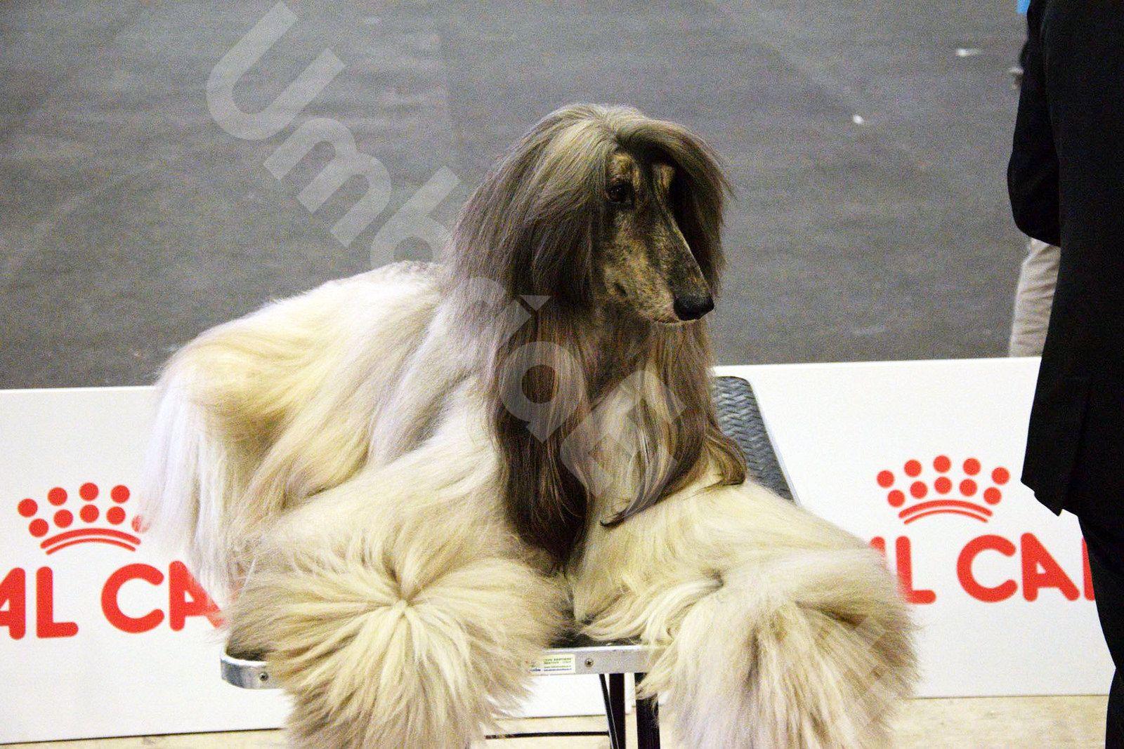 Perugia Pet