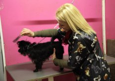 Beauty Dog Pet Shop e Toelettatuta a Terni